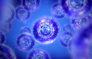 organismic cells