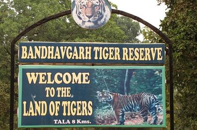 Bandhavgarh tiger reserve image