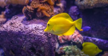 Business plan and Ideas on Ornamental Fish Farming