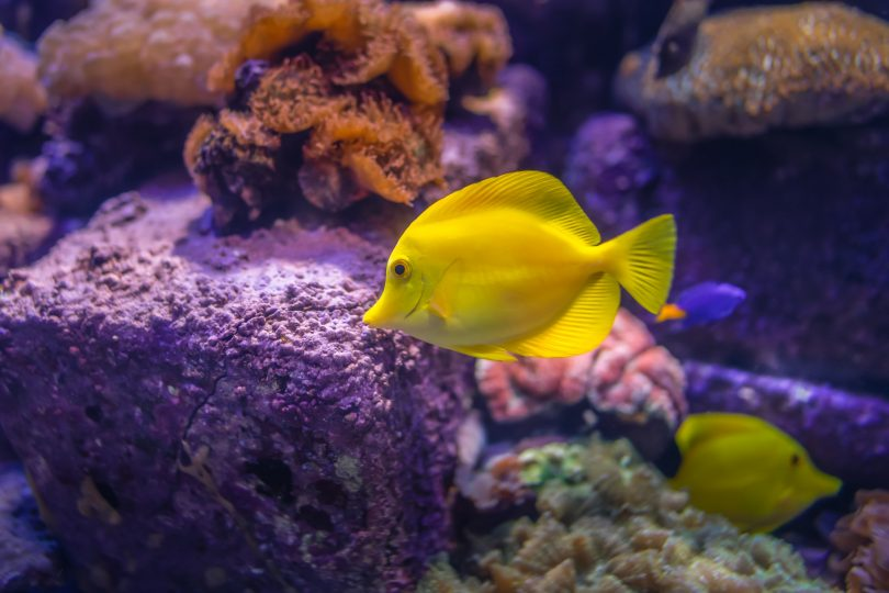 Business plan and Ideas on Ornamental Fish Farming
