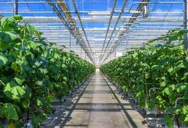 Agtech Softwares Have Transformed the Agriculture Practices Drastically When Used Optimally